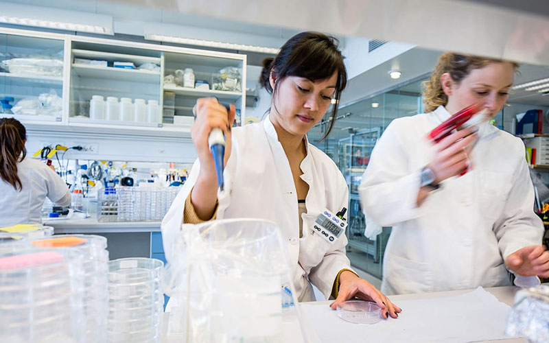 Two Novozymes scientists working in a lab with petri dishes