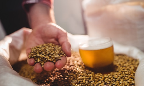 Brew with enzymes – good for brewers, farmers, the planet ǀ Novozymes